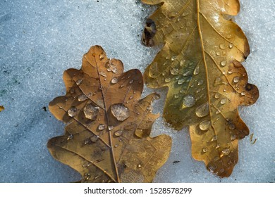 Close up two autumn leaves in puddle frozen in unique, geometric type pattern. Autumn yellow leaves covered with ice. Frozen Relationships. Early winter. The cold is close