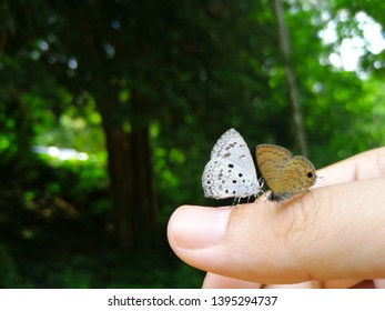 Close up of two colourful Butterflies are sitting on finger with nuture and green tree background at Kaeng Krachan National Park, Phetchaburi, Thailand.