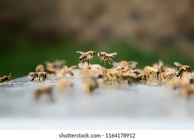 Close up of two flying bees. Beekeeping concept.
