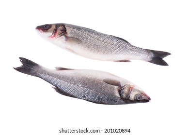 Close up of two fresh seabass fish. Isolated on a white background.