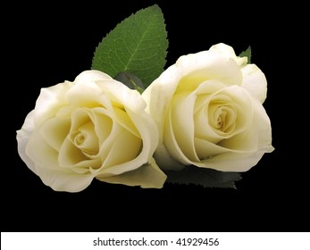 close up two white roses isolated on black background