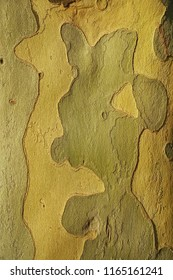 Close up uf platan bark with abstrak forms and textures