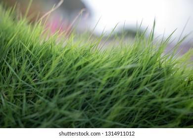 Close uo image of grass in Caribbean