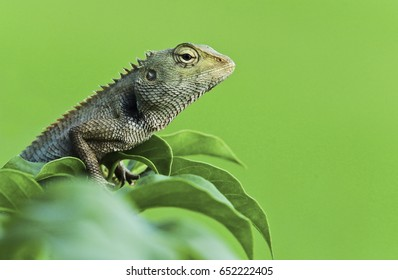 Close up. Animals chameleon on the tree flowers