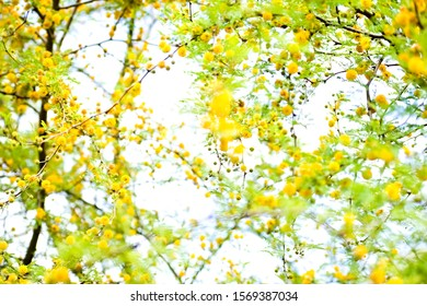 Branches Yellow Flower Images Stock Photos Vectors Shutterstock