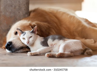 close up, cat and dog together lying on the floor