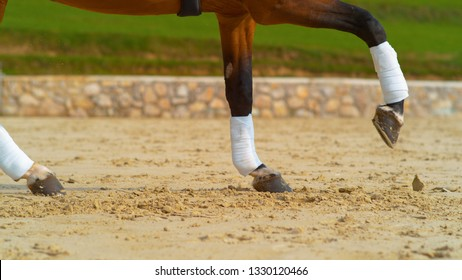 CLOSE UP: Chestnut stallion with bandaged legs cantering in the sandy outdoor arena. Cinematic shot of brown horse's hooves digging up the sand during its gallop in the paddock. Fun outdoor activity