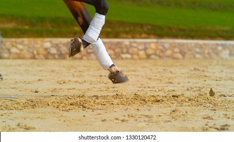 CLOSE UP: Cool shot of brown horses bandaged legs as it canters past the camera during a English dressage competition. Chestnut gelding galloping across the paddock. Close up shot of a horse's trot.