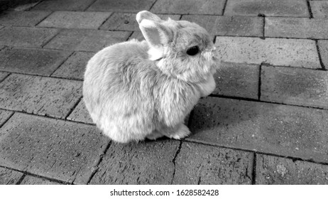 (Close Up) A cute and adorable rabbit photo