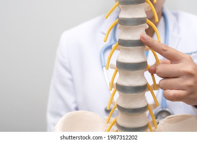 Close up, Doctor pointing anatomical spine in medical cilnic, Medical and healthcare concept , Image with a soft focus, Copy space