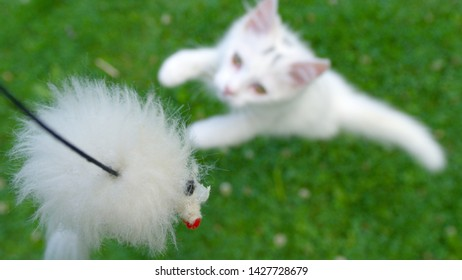 CLOSE UP, DOF: Frisky white kitten jumps at the fluffy toy mouse on a string. Unrecognizable owner teasing its cute long haired cat with a toy on a string. Young cat playing in the green backyard.