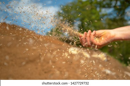 CLOSE UP, DOF: Small seeds come flying out of the farmer's hand sowing grass on a sunny summer day. Seeds get scattered as unrecognizable female gardener sows wheat in the fertile cultivated land.
