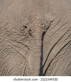 Close up, full frame rear view of an elephant backside with tail and wrinkles