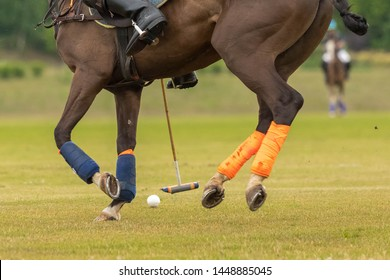 Close up. Legs of a horse for a game in a horse polo in gallop. Hoofs are grounded, legs are bandaged. On a grass between legs of a horse a ball for a polo which the rider beats with a club
