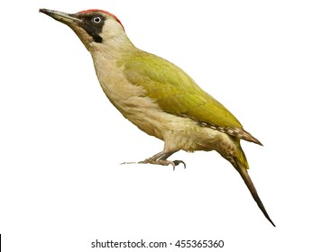 Close up, Picus viridis,  Green woodpecker, female, isolated on white background.