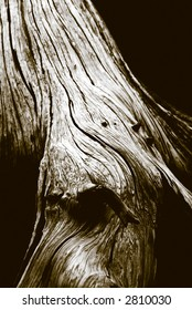 Close up, short depth of field detail of grainy old tree trunk rendered in duotone.