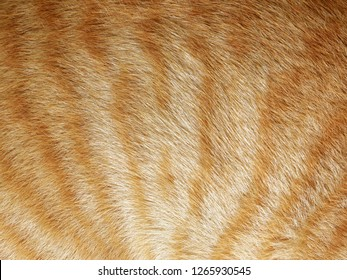 Close up, top down view of soft cat fur, brown stripes on white background.