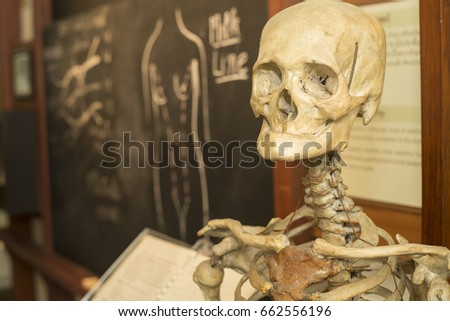 Close Up Human Skeleton Class Anatomy Class Stock Photo Edit Now