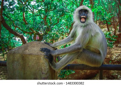 Close up,view Monkey, sitting, in iron railing, is scared by opening his mouth