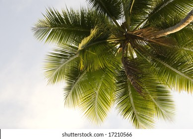 Close up upward view of a lone palm tree against the sky background