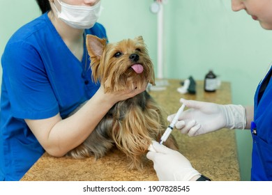 Close up veterinarian giving an injection to a dog at hospital