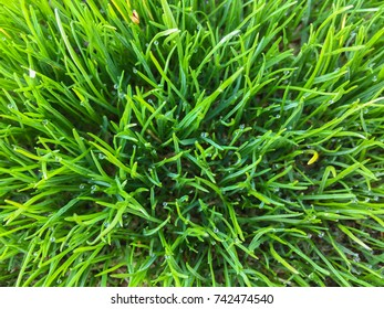 A close up of vibrant green grass reaches up towards the viewer in a downward looking angle.
