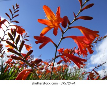 Close up of vibrant Orange flower in field with blue sky and clouds