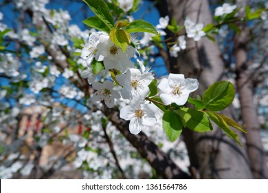 close up view of beautiful apple tree blossom