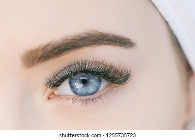 Close up view of beautiful blue female eye with long eyelashes, smooth healthy skin. Eyelash extension procedure. Perfect trendy eyebrows. Good vision, contact lenses. Eye health and care.