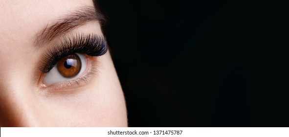 Close up view of beautiful brown female eye with long eyelashes and perfect trendy eyebrows on dark background. Eyelash extension procedure.