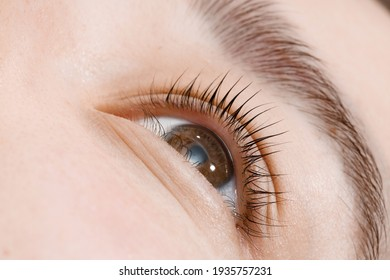 Close up view of beautiful female eye with long natural lashes. Eyelash extension procedure. Natural eyebrows. Good vision, contact lenses. Eye health care.