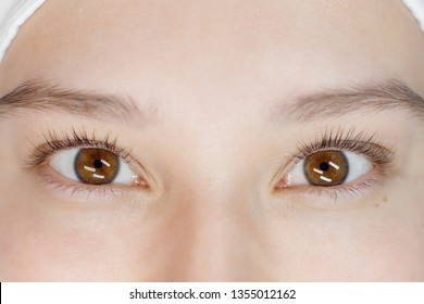 Close up view of beautiful female eyes with long natural lashes. Eyelash extension procedure. Natural eyebrows. Good vision, contact lenses. Eye health care.