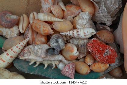 Close up view of beautiful shell decoration. Few smaller shells in one big shell. Decoration concept. Beautiful background.