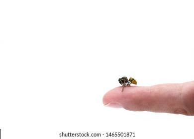 Close up view of bee sting mans finger isolated on white background. Wasp on human finger, most people have allergic reaction after which is usually swelling and pain