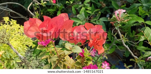 Close View Beutiful Red Pink Orange Nature Parks Outdoor Stock