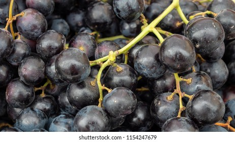 Close Up View of Black Grapes in daytime