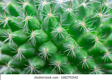 Close up view of a bright green cactus detail texture