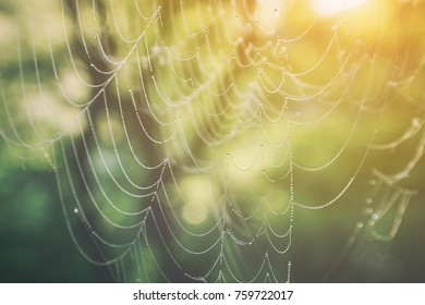 Close up view of a cobweb with dew drops at sunrise with the sun glow in the right corner