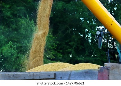 Close up view of combine harvester unloading wheat grain into tractor trailer