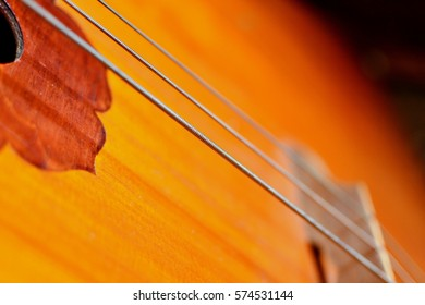 Close up view of contra bass strings