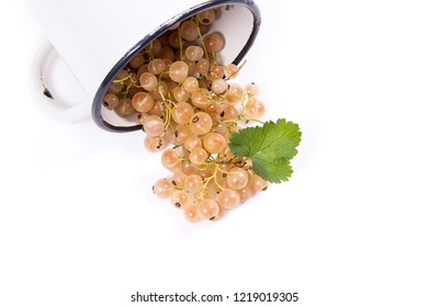 Close up view of cup with white currant berry isolated on white background. A white cup with currant berry and small bunch of currant with small green leaf of currant bush in front of cup.