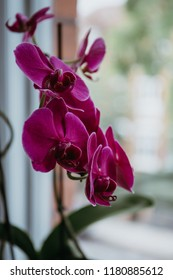 Close up view of a delicate pink orchid flowers on the stem.
