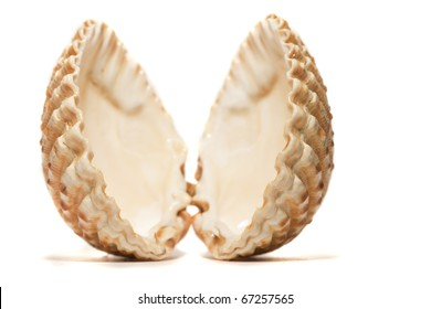 Close view detail  of a cockle shell isolated on a white background.