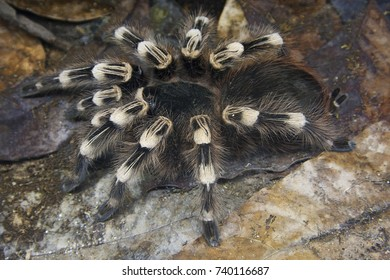 close view of an enormous spider