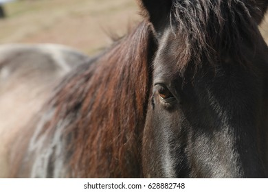 A close up view of an eye of a horse with a blurred man and hip in the background.