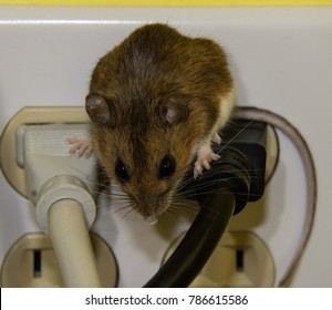 Mouse Poop Images, Stock Photos & Vectors | Shutterstock