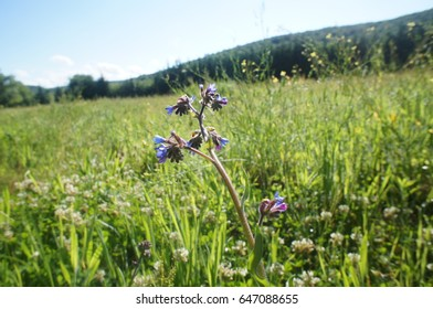 Close View and Flowers in the Nature
