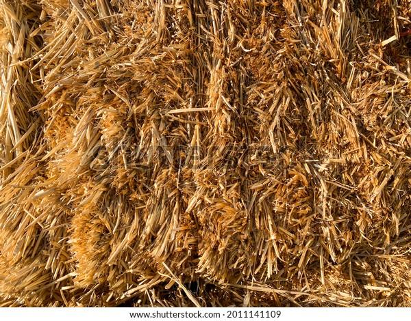 a close up view of fresh hay bale straw bundle  farming farm agricultural fodder