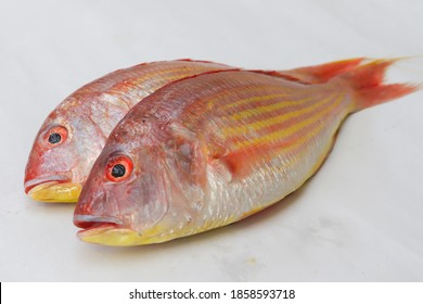 Close up view of fresh Pink Perch (thread finned Bream) on a White Background,Selective focus.