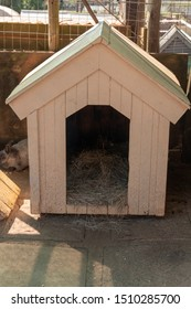 A close up view of the front of a rabbits hut with hay and food inside